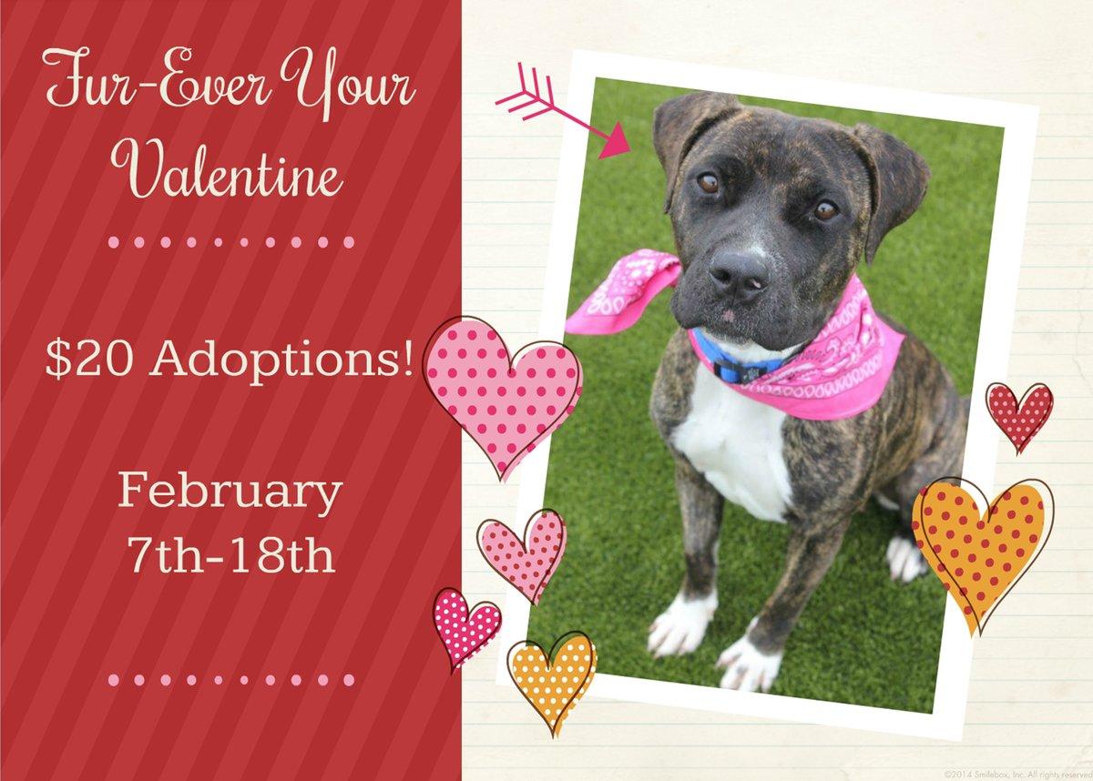 bryan-animal-adopt-valentines-day
