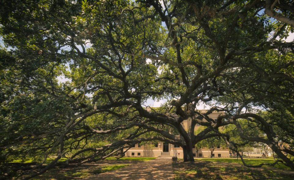 century-tree-joan-carroll